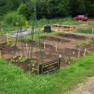 St. James Community Garden Picnic